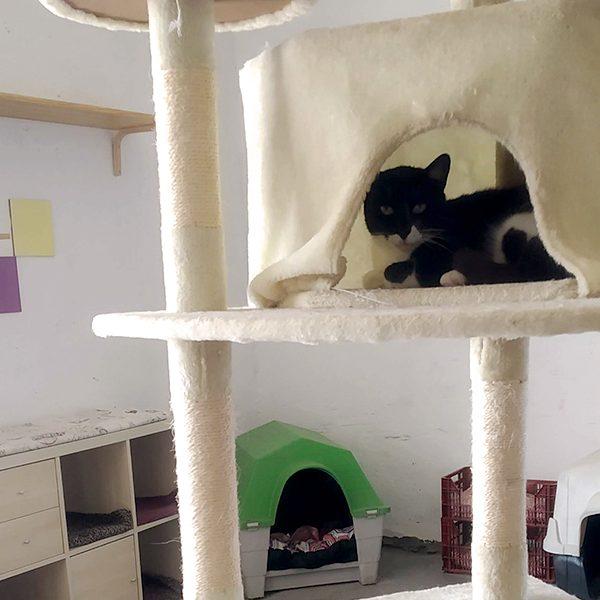 Refugio Nuevo